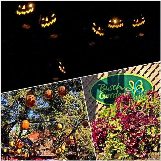Pumpkins and jack o lanterns by night and day at busch - Busch gardens williamsburg halloween ...